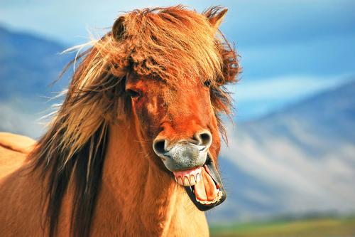lustiges Pferd - Gedichte über Pferde